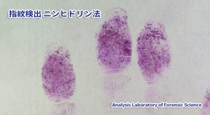 指紋検出-ニンヒドリン法